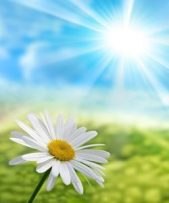 i petali si schiudono alla luce del sole
